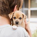Ελιξίριο υγείας για μικρούς και μεγάλους οι σκύλοι!