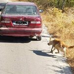 Κρήτη: Αλλαγή δεδομένων στην υπόθεση του οδηγού που έσερνε τον σκύλο με το αυτοκίνητο