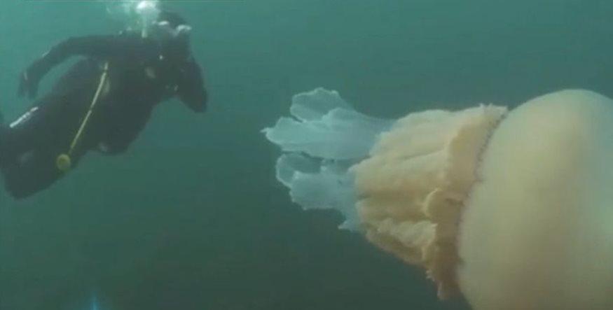 Εντοπίστηκε μέδουσα - γίγας μήκους 1,5 μέτρου (Βίντεο)
