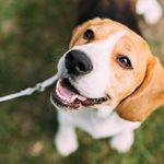 8 υπέροχοι λόγοι για να υιοθετήσετε (και όχι να αγοράσετε) ένα σκυλάκι!