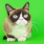 Πέθανε η Grumpy Cat, η πιο διάσημη γάτα του Ίντερνετ
